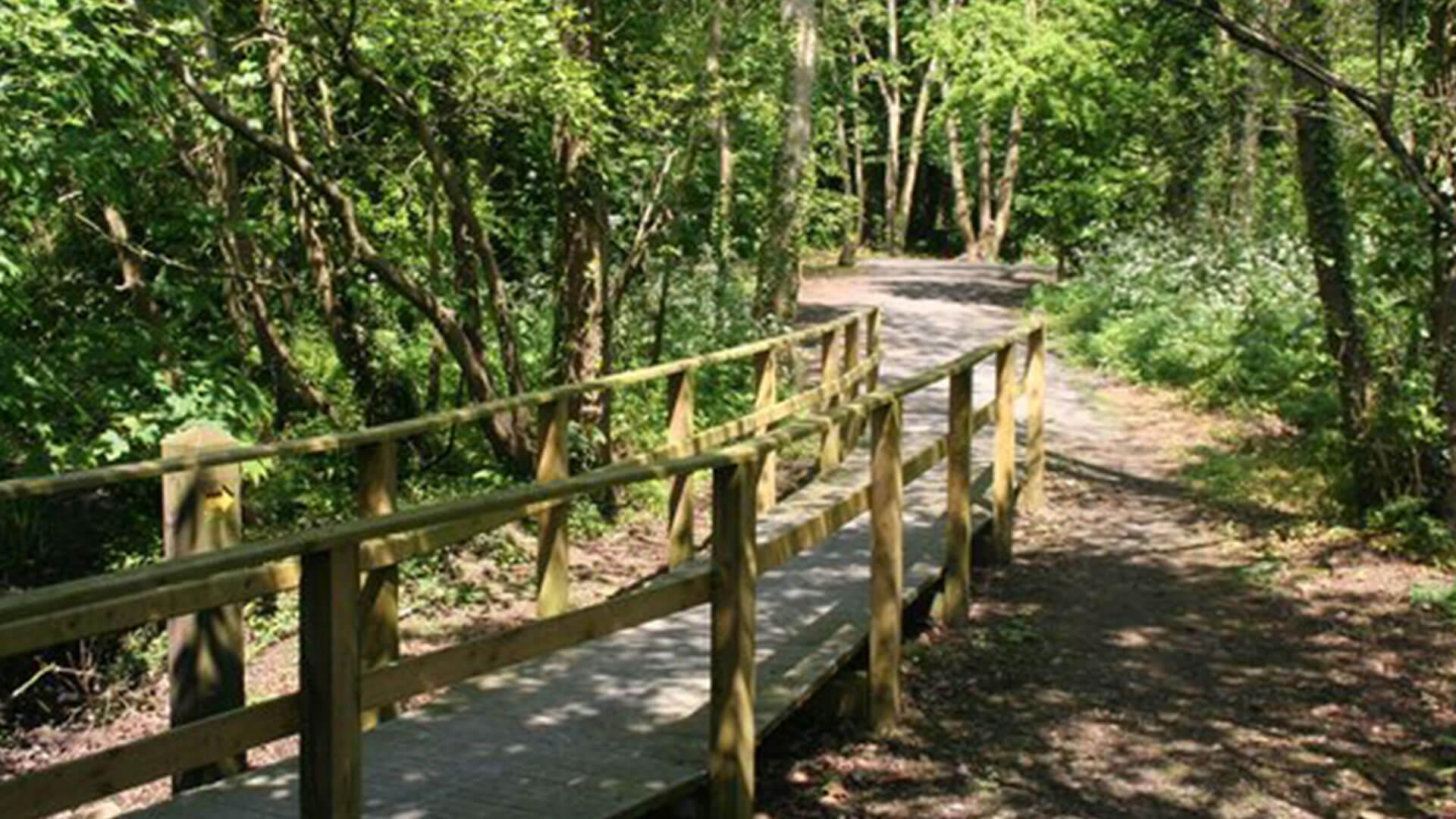 Ballyronan Woodland