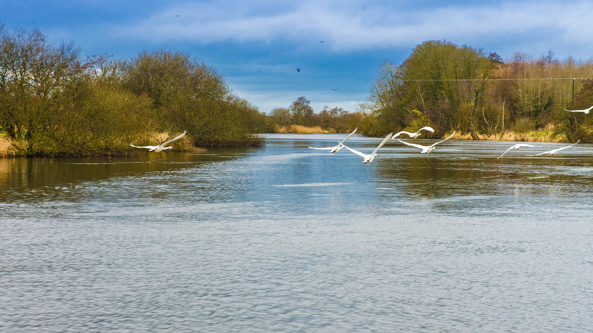 Birds at Lough Beg