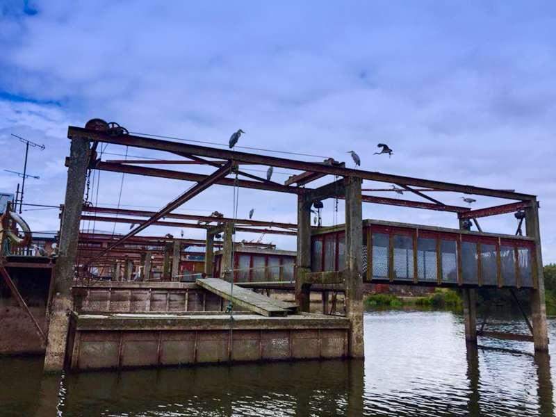 Herons-at-Toome-Eel-Fishery-