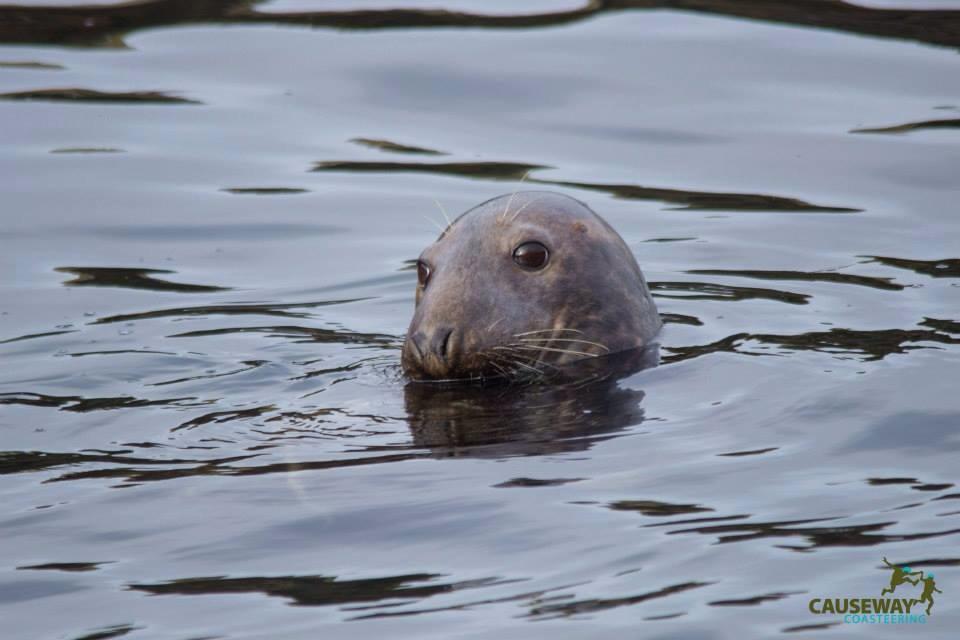 Seal at Inishtrahull 2