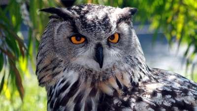 World of Owls