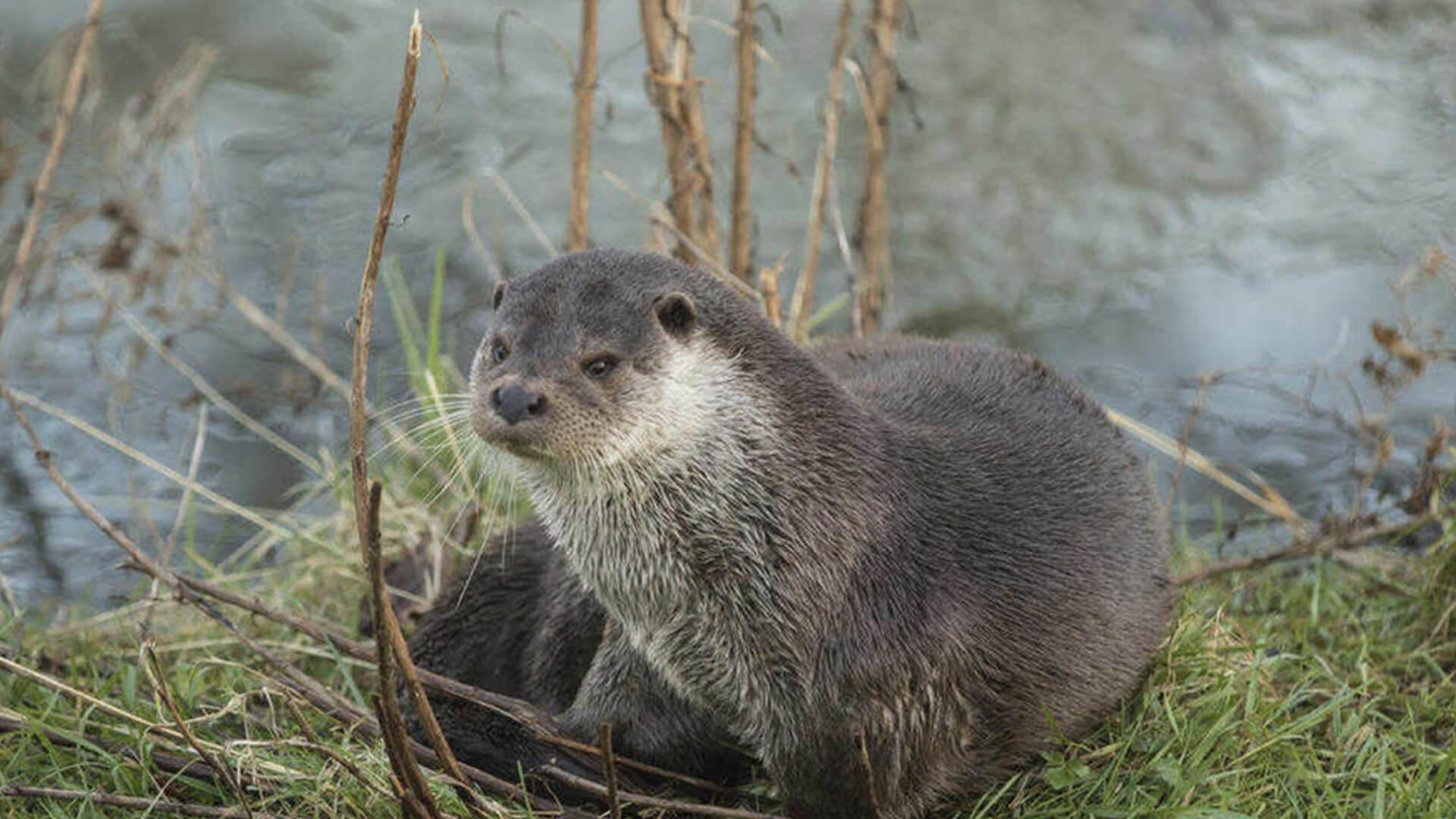 Otter River Bann